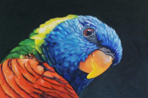 BoW – The Rainbow Lorikeet